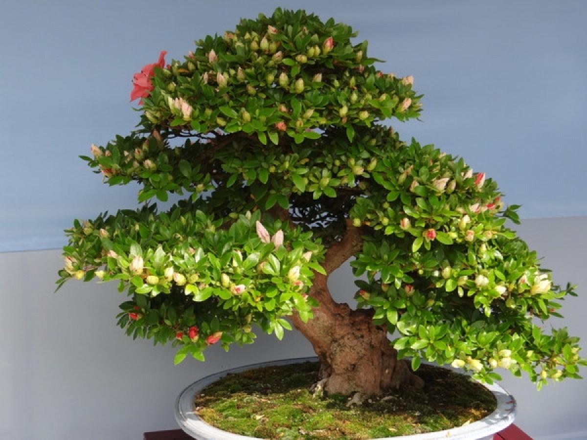 Bonsai care (part 3). Soil and Chemicals for Bonsai