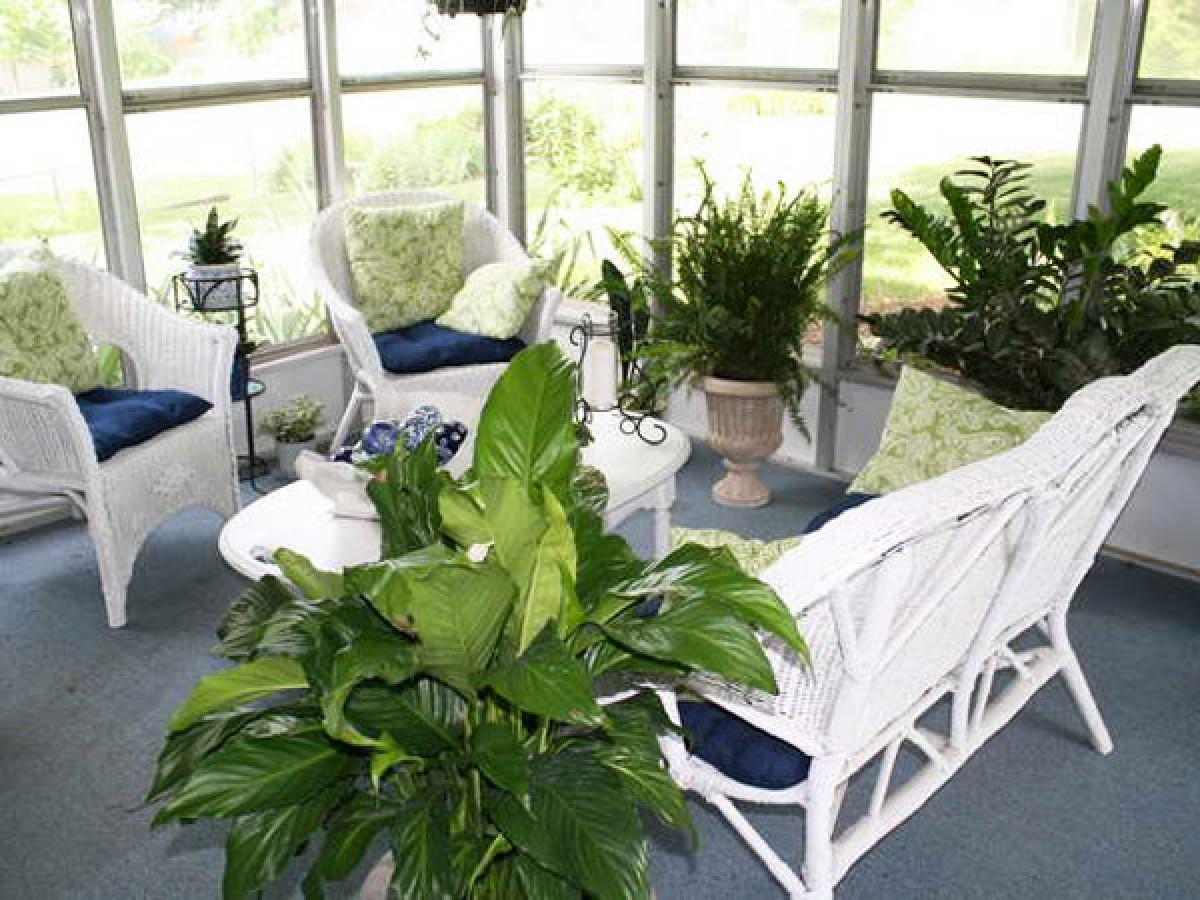 Уход за большими комнатными растениями