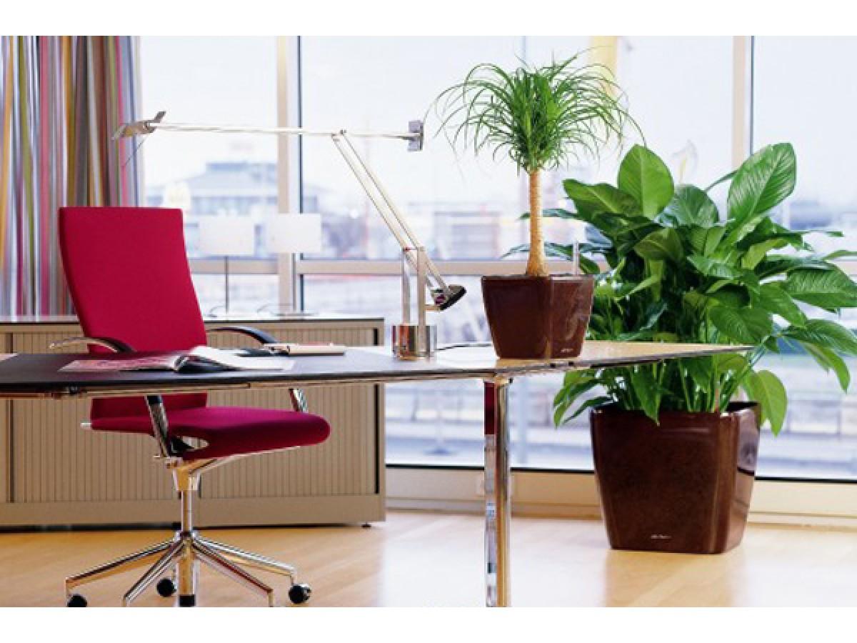 Як не помилитися у виборі рослини для офісу