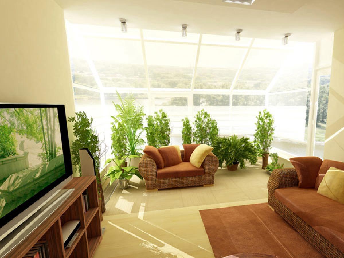 Як розташувати рослини в кімнаті?