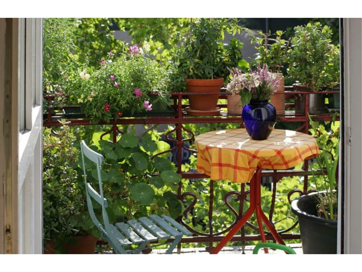 How to create hanging gardens on your balcony or terrace