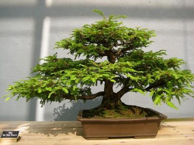 Meet bonsai. Where to start bonsai?