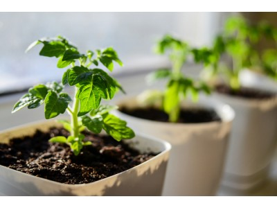 Plant transplant - when to do it