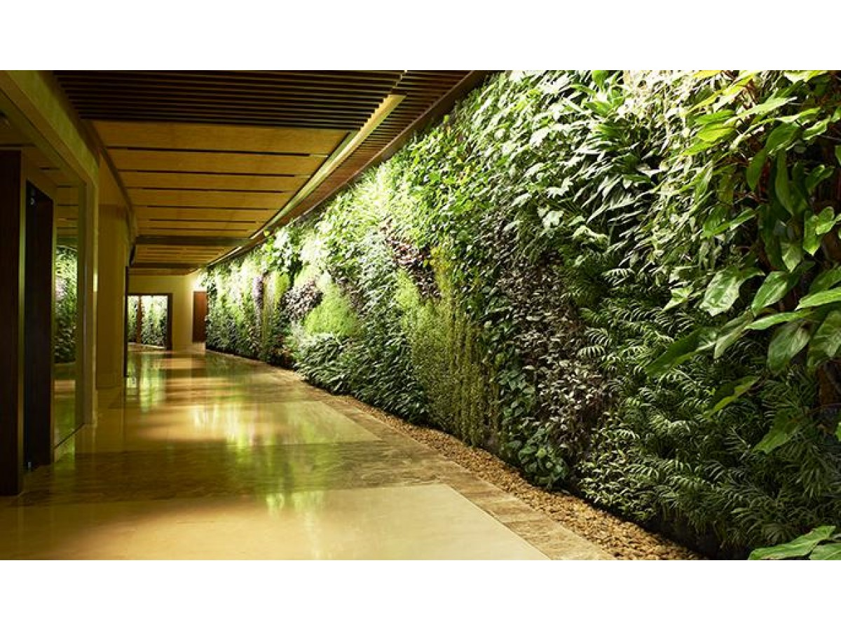 Fitostena (Plant wall) - a green wall of living plants