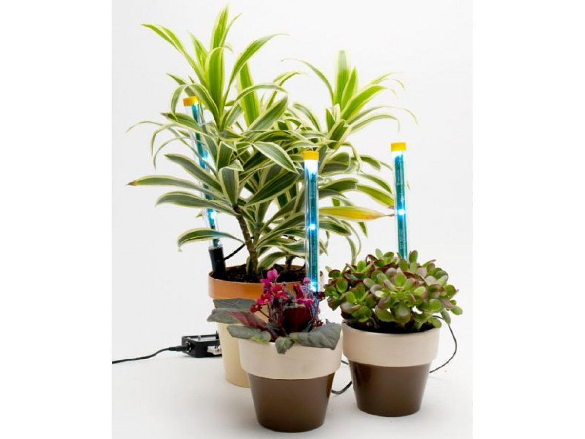 Temperature. Effect on plants