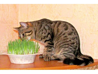 Why cats and dogs love to eat grass