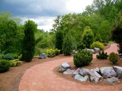 Хвойні в саду: зелений ділянку круглий рік