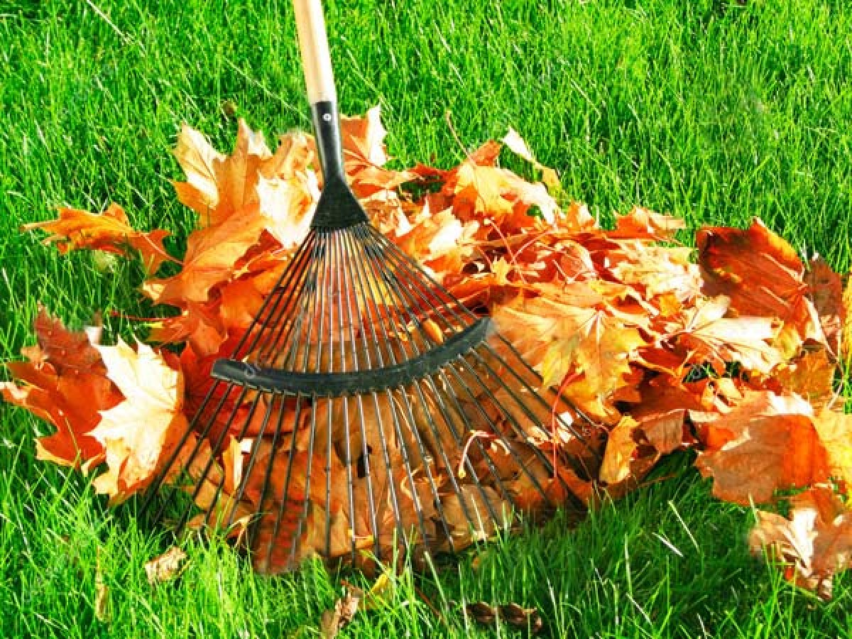 7 things to do in the garden before winter comes