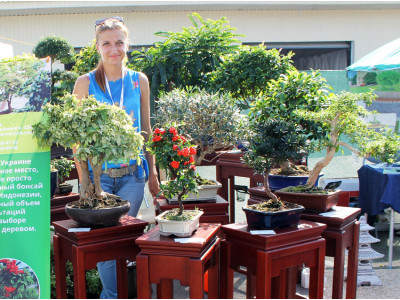 Festival ART GREEN FEST - 2015, 3: Bonsai and others
