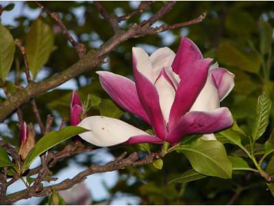 Botanical Garden - 2008. Part 2.