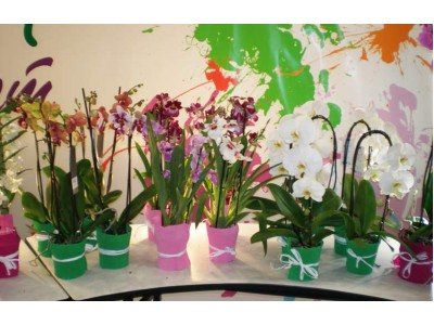 Выставка Flowers & HorTech & CIS - 2012