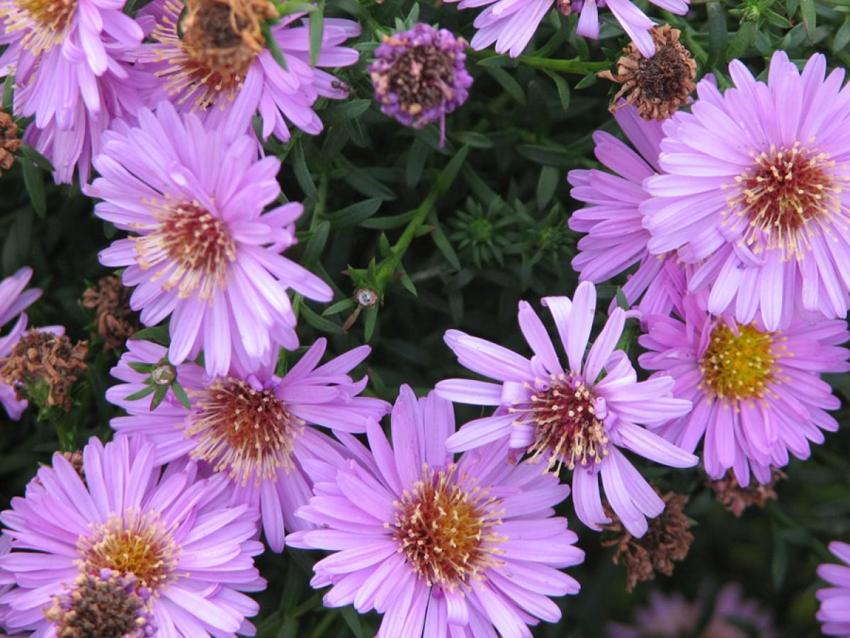 Садовые цветы. Коллекция. Часть 1