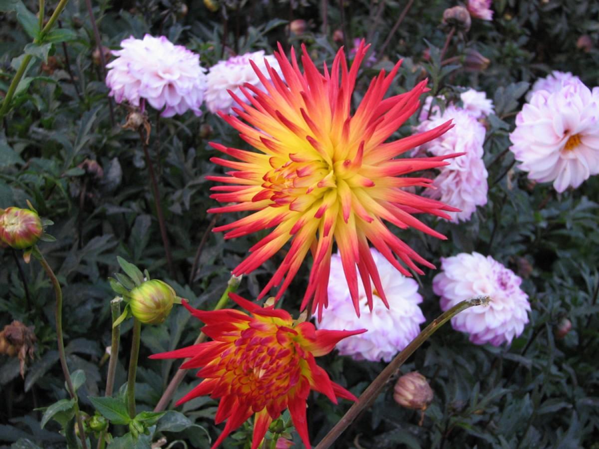 Садові квіти. Колекція. Частина 2