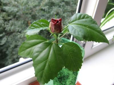 Комнатные растения: жасмин, юкка, араукария и др.