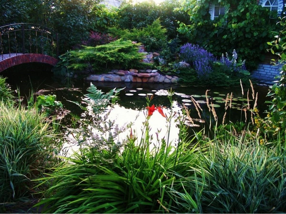 Мой любимый сад. Лилии, георгины, тюльпаны...