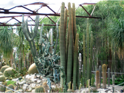Gallery of cacti near Nikitsky Botanical Garden. Summer 2013