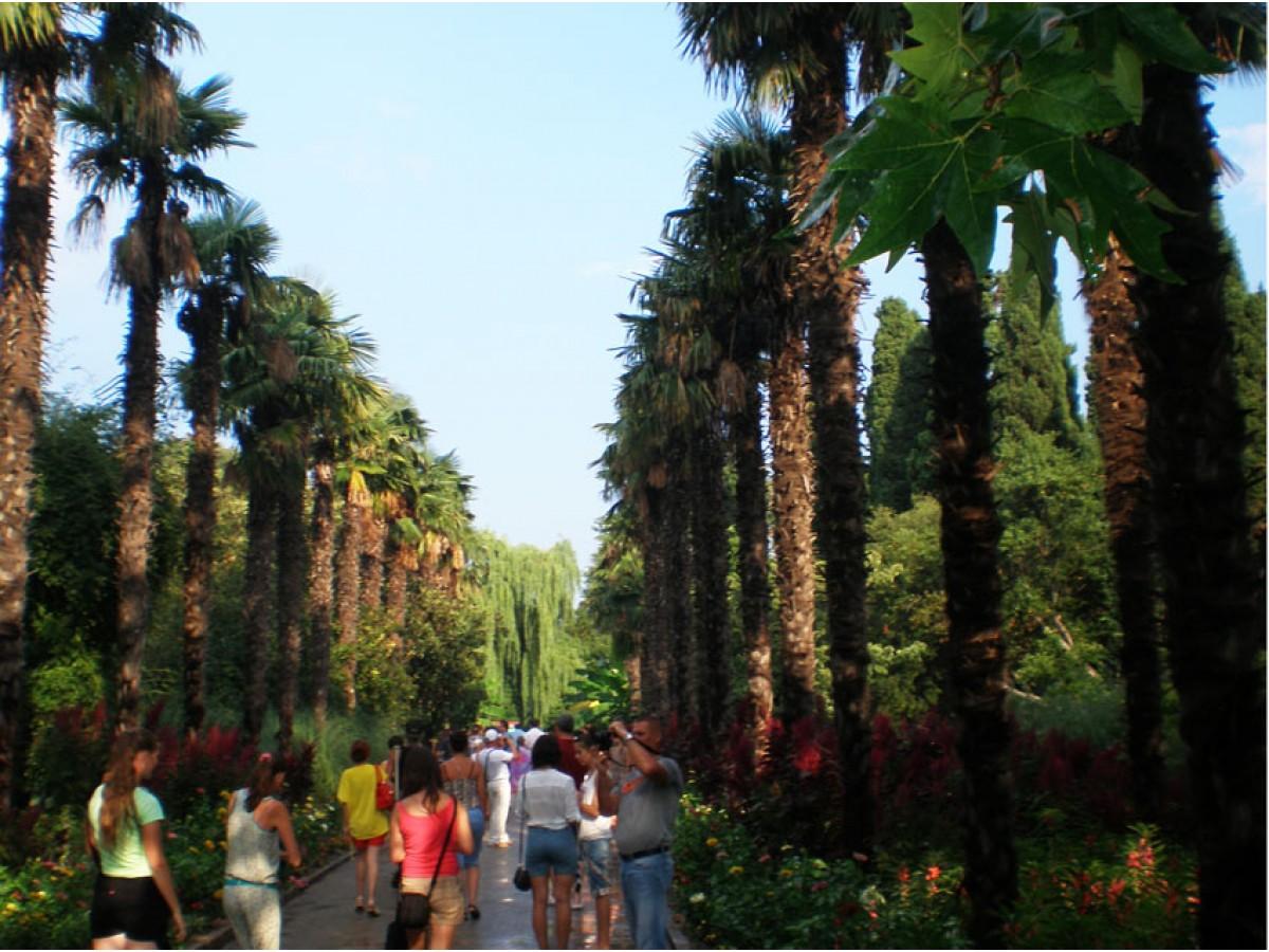 Никитский ботанический сад. Лето 2013
