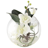 Orchids for every taste, delivery across Kiev and Ukraine