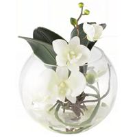 Орхідеї на будь-який смак, доставка по Києву і Україні