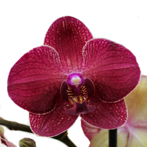 Orchids - butterflies for every taste