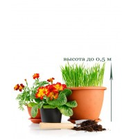 Пересадка кімнатної рослини до 0,5 м
