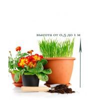 Пересадка кімнатної рослини від 0,5 до 1 м