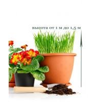 Пересадка кімнатної рослини від 1м до 1,5м