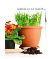 Пересадка кімнатної рослини від 1,5 до 2м