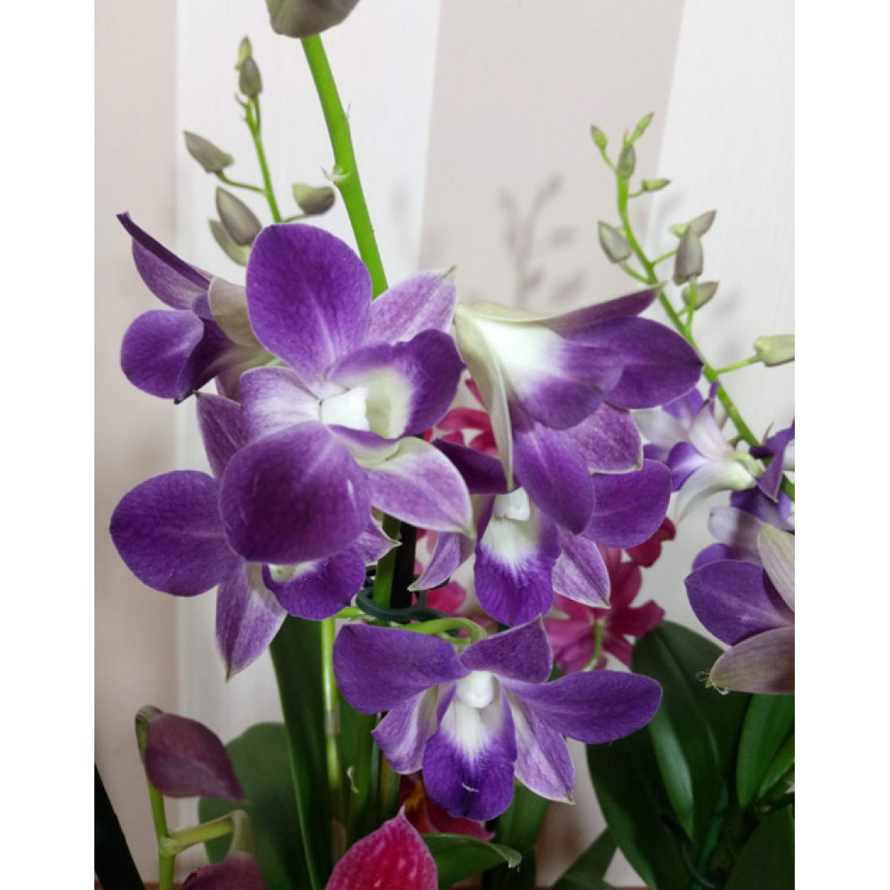 """Композиция из орхидей """"Весеннее утро"""""""