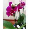 """Композиция из орхидей """"Трио колор"""""""