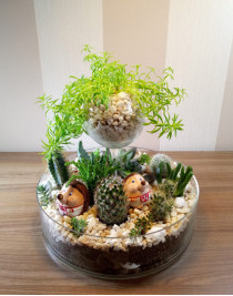 """Composition of succulents """"Brothers hedgehogs"""""""