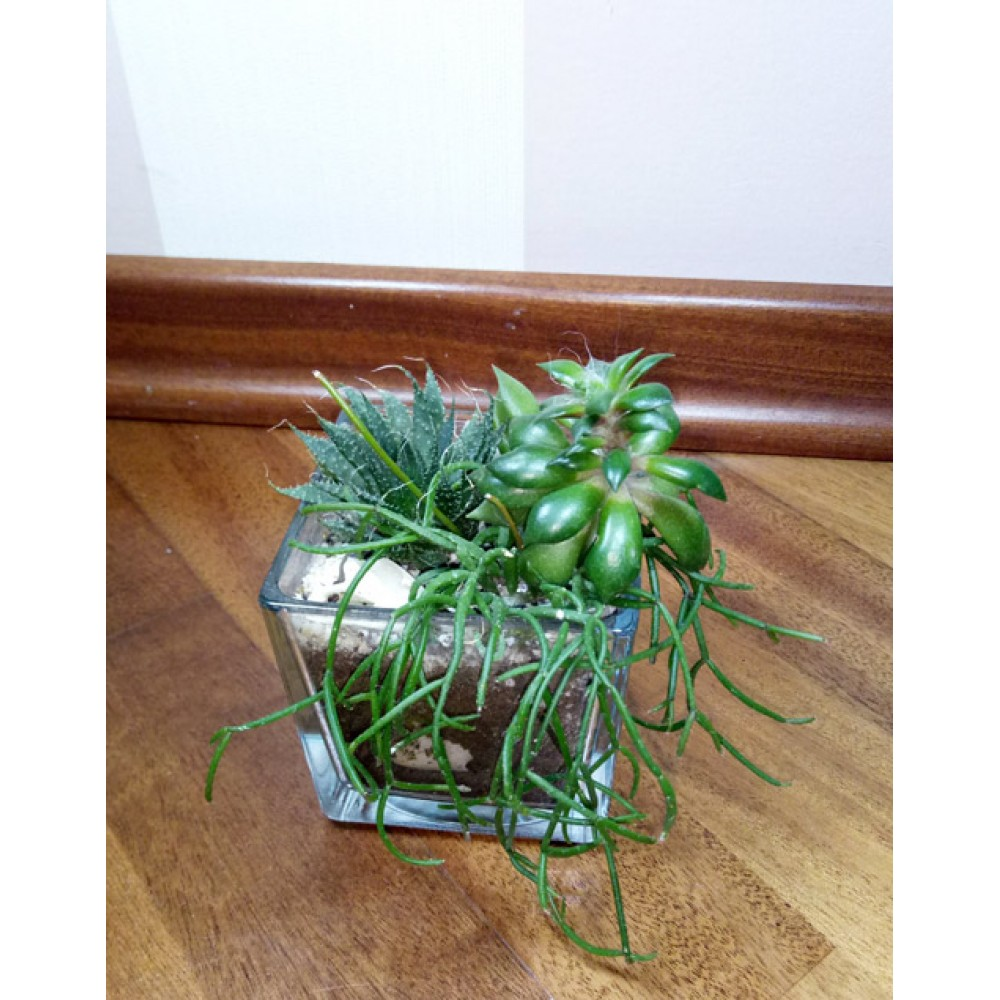 "Composition of succulents ""Cube"""
