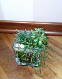 "Composition of succulents ""Cube"""