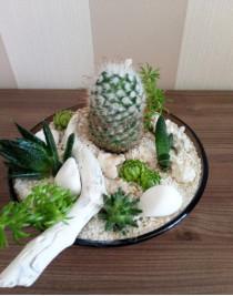 "Composition of succulents ""Coral Dream"""