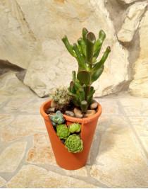 "Composition from succulents ""Miniature garden"""