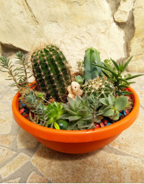 """Composition of succulents """"Island of pirates"""""""