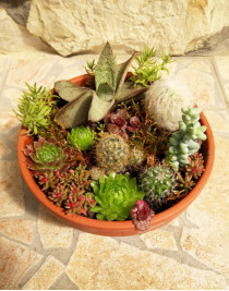 """Composition of succulents """"Stonecrop Glade"""""""
