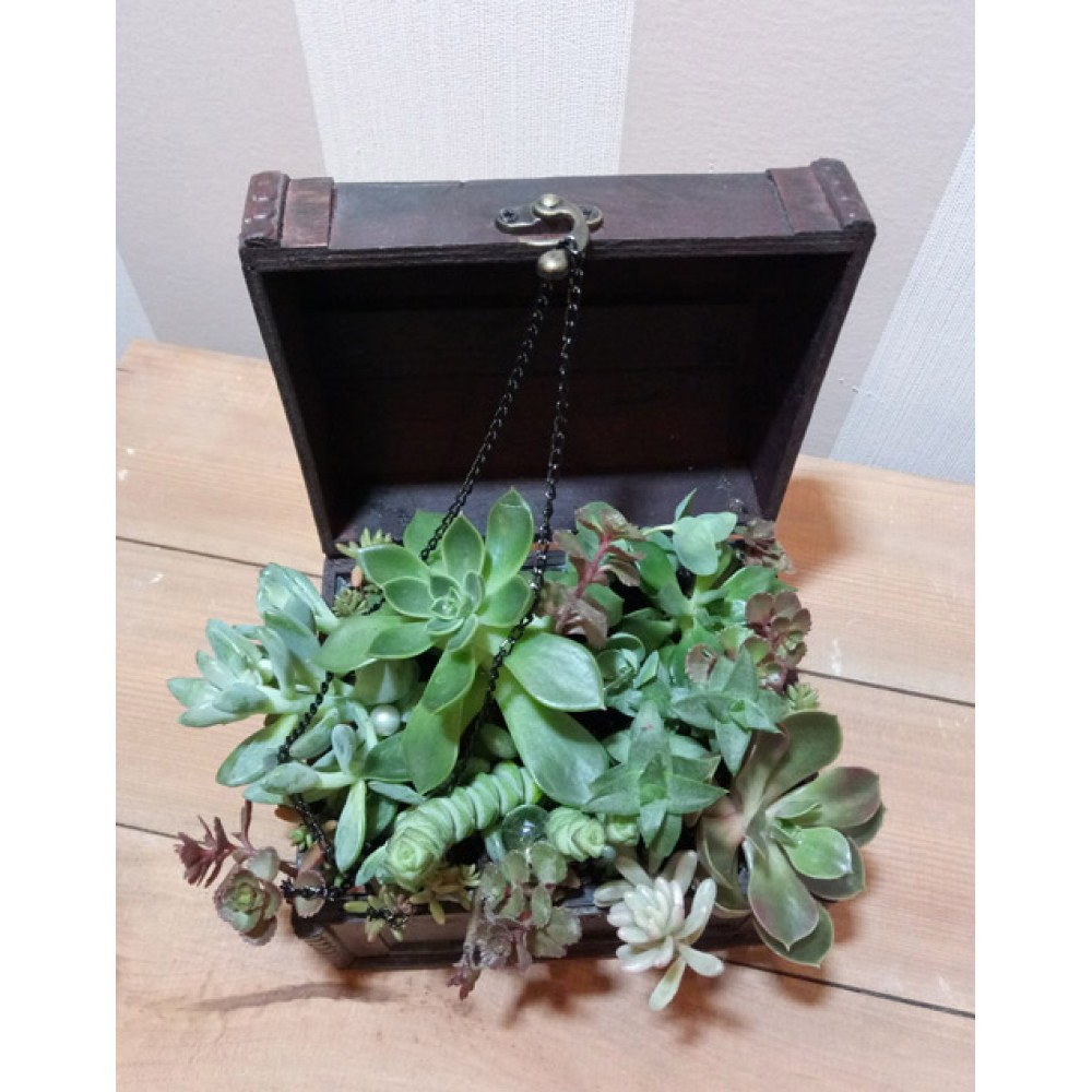 "Composition of succulents ""Treasure chest"""