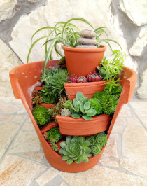 """Composition of succulents """"Abandoned garden"""""""