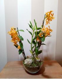 "Flower arrangement ""Ginger cat"""