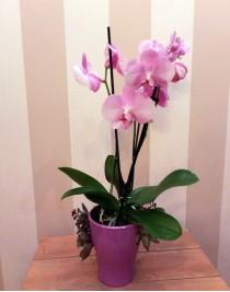 "Flower arrangement ""Lilac Dream"""