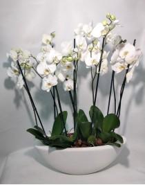 """Композиция из белых орхидей """"Леди Уайт"""""""