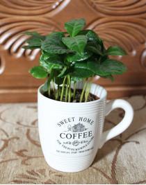Arabica coffee in a cup