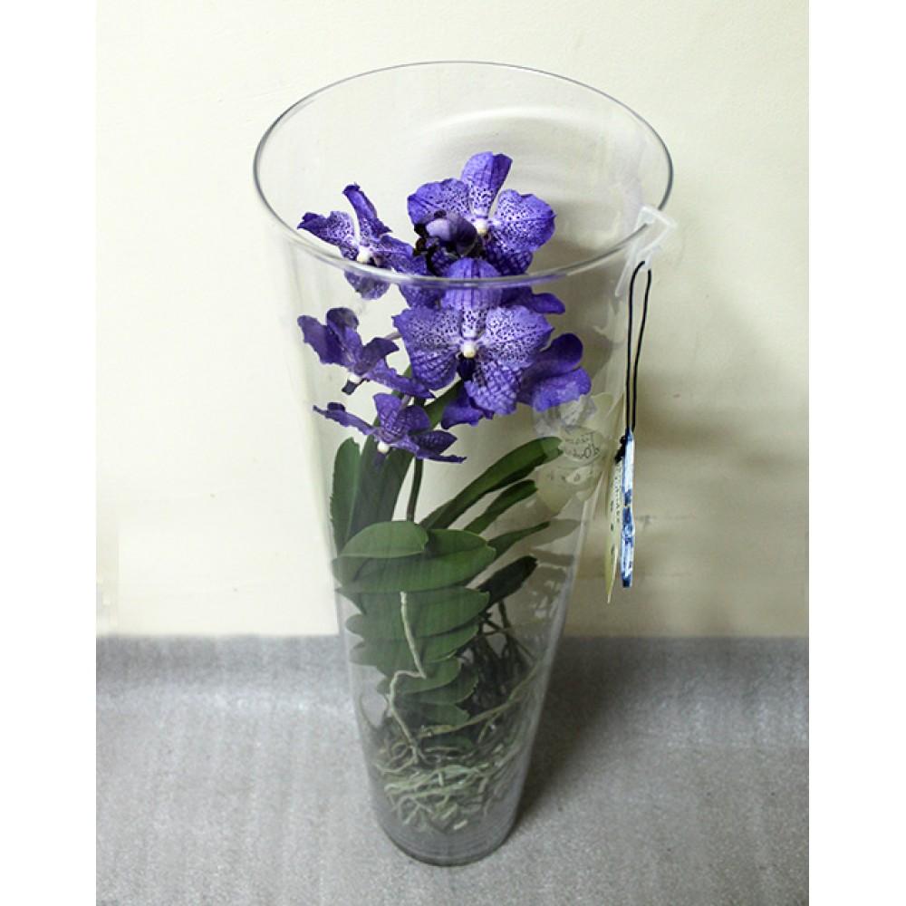 Орхидея Ванда Michelle в вазе. 70 см