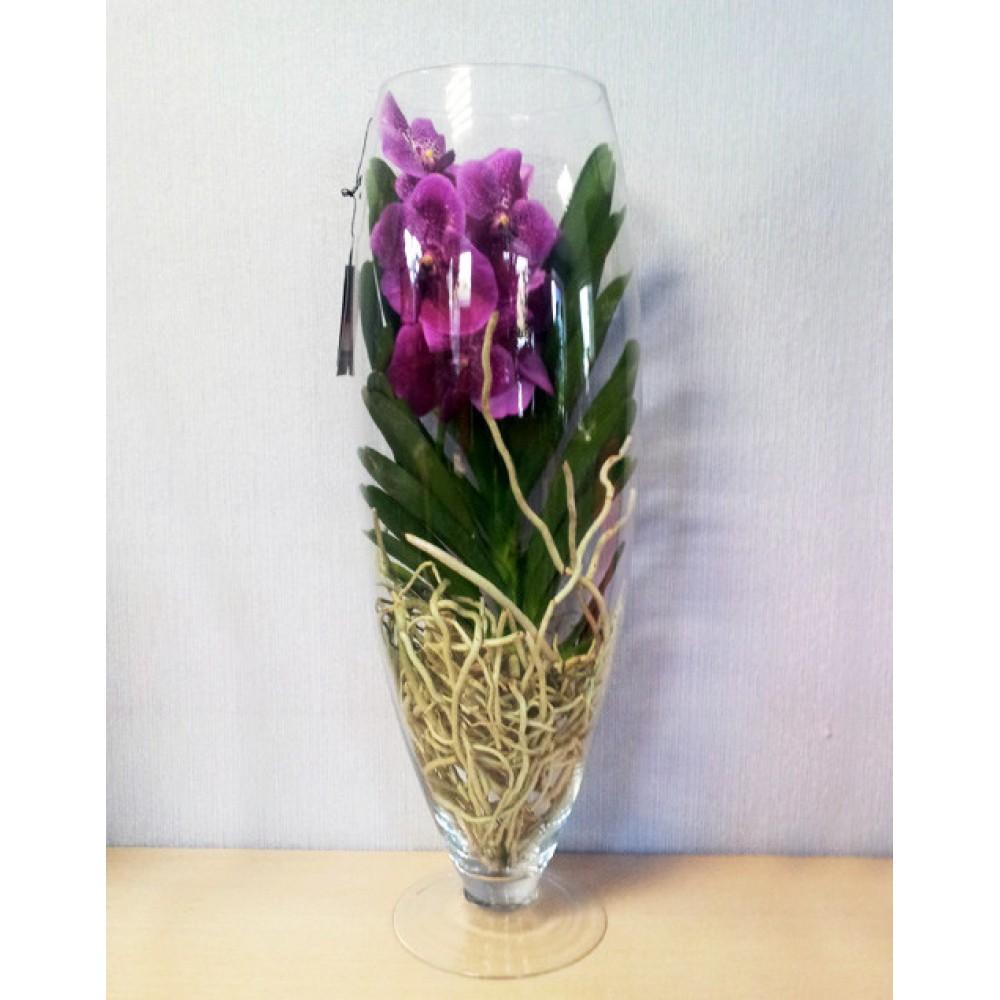 Орхидея Ванда в стеклянном бокале, 70 см