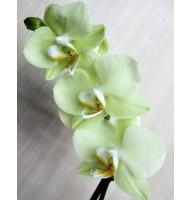 Міді-орхідея жовта (55 см)