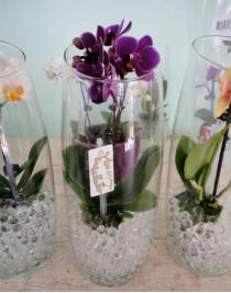 Міні-орхідея в скляній вазі