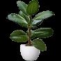 Декоративно-листяні (115)