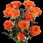 Garden roses (0)