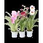 Орхидеи (24)